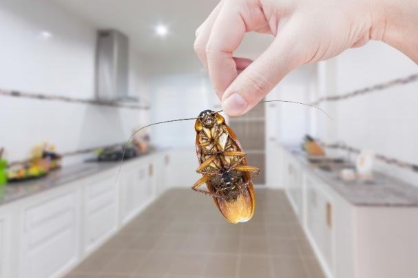 hand holding cockroach in kitchen
