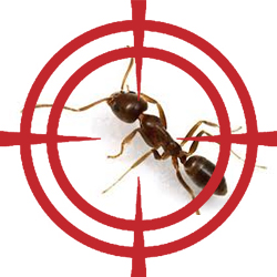 pest control targeting ants