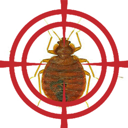 pest control targeting bed bugs