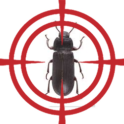 pest control targeting beetle
