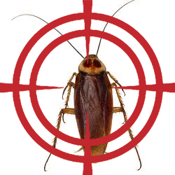 pest control targeting cockroach