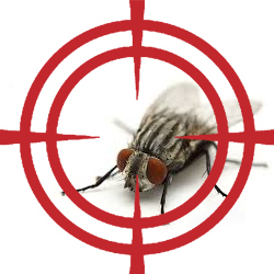 pest control targeting flies