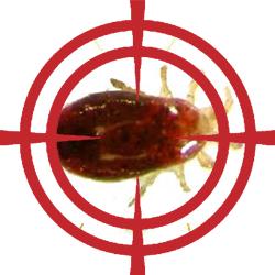 pest control targeting mites