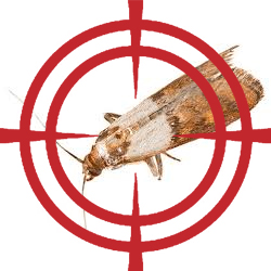 pest control targeting moths