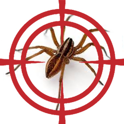 pest control targeting spider