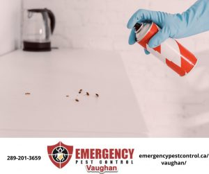 emergency-pest-control-vaughan-service--300x251.jpeg