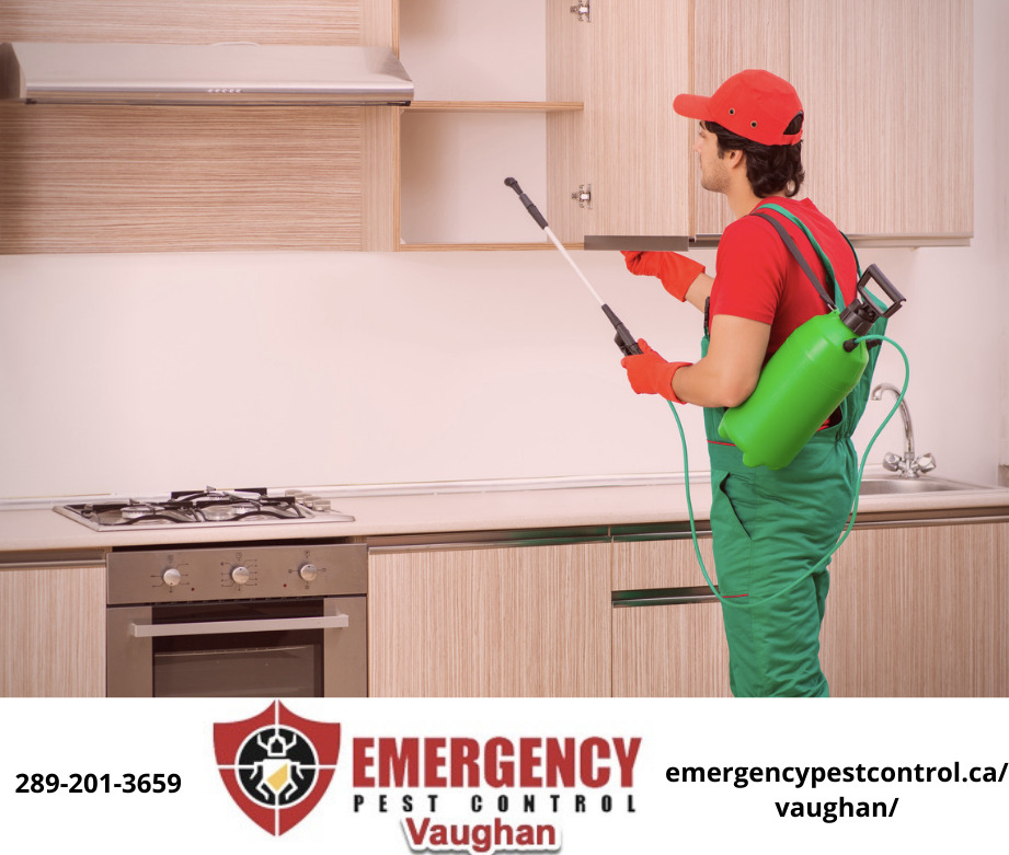 emergency-pest-control-vaughan-team-.jpeg