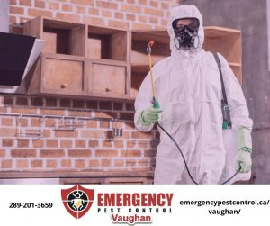 emergency-pest-control-vaughan-team-member-300x251.jpeg