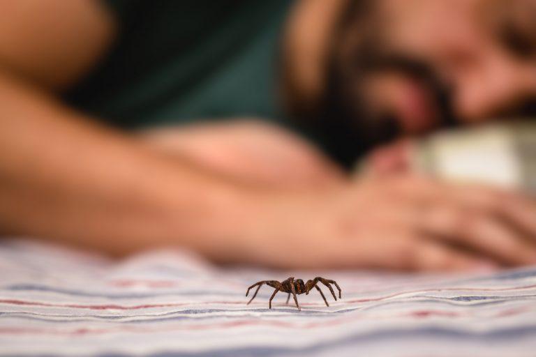 Spider infestation