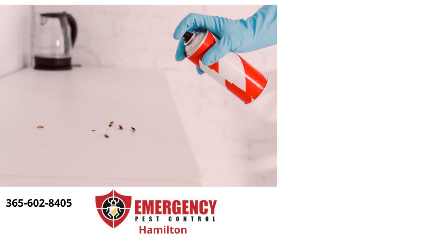 Hamilton-5-1536x864