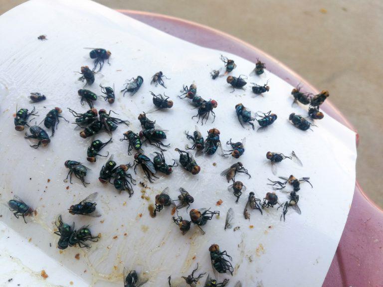 get-rid-of-flies
