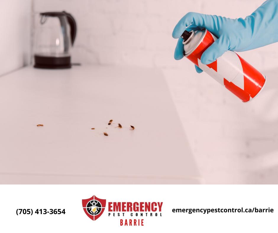 Barrie Emergency Pest Control